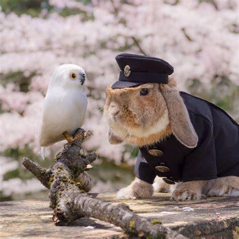 conejo de fuego 2016 puipui el conejo m 225 s elegante del mundo taringa
