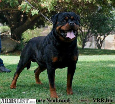 akc rottweiler armslist for sale trade akc greman rottweiler pups