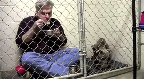 comfort hill kennel veterinarian eats in kennel to comfort scared shelter dog
