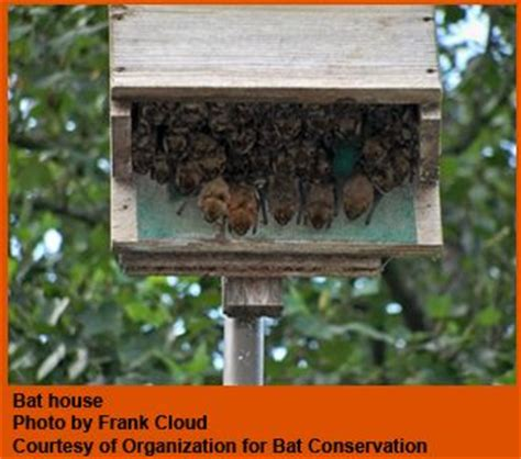 build and or install a bat house bat houses pinterest