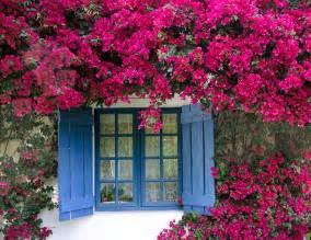 Blue Trellis Wallpaper Primavera 233 Intensidade 233 Flor 233 Paix 227 O Jardim Do Cora 231 227 O