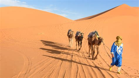 el desierto de los 8420669865 los pastores podr 237 an haber participado activamente en la