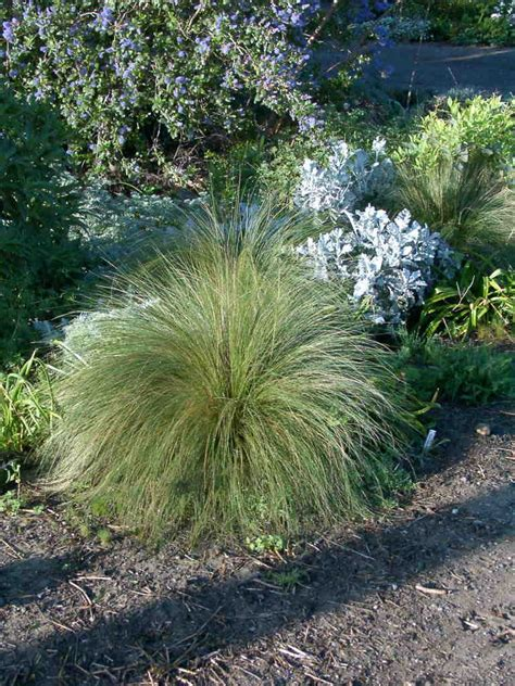 small ornamental grasses www pixshark com images galleries with a bite