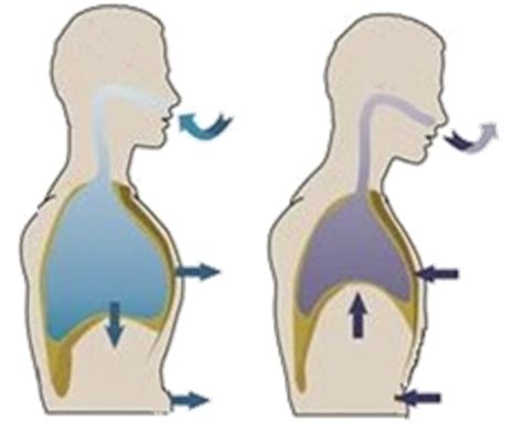 imagenes de respiracion yoga 191 para qu 233 sirve el nervio vago