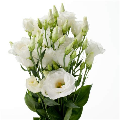 fiore lisianthus white lisianthus melody floral recipe flowers