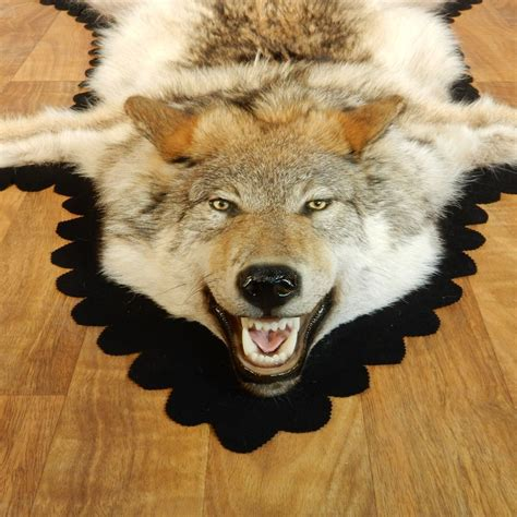 wolf rug taxidermy wolf rug taxidermy 28 images wolf skin rug with mount taxidermy antique wolf