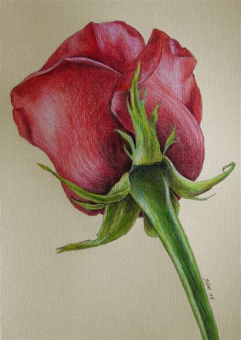 drawing color beautiful color pencil drawings great inspire