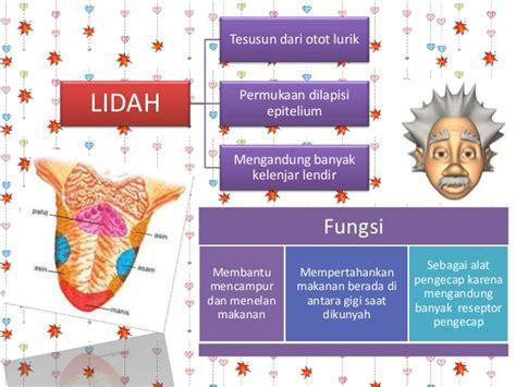 Gigi Asli Manusia Pedo Gigi Anak Geraham Molar Kedua Rb sistem pencernaan manusia dan ruminansia