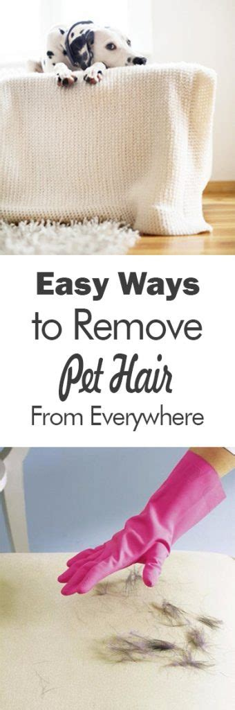 best way to remove pet hair from couch easy ways to remove pet hair from everywhere 101 days of