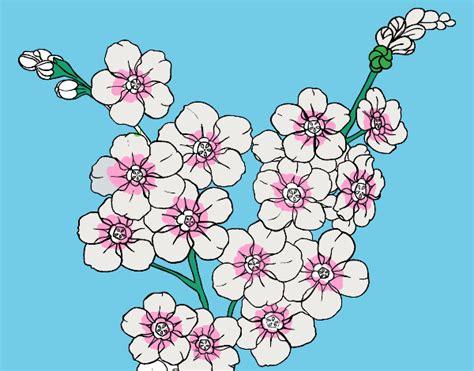 fiore di ciliegio disegno fiore di ciliegio colorato da utente non