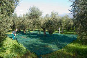 tende per raccolta olive le reti per la raccolta delle olive frantoio san martino