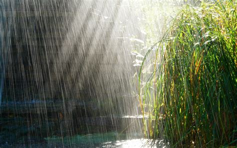 Rainy Summer by Types Of Weather Rainy