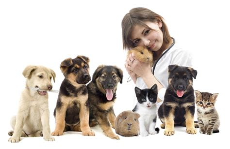 8 Tips On How To Choose A Vet For Your Pet by So You Want To Be Vet The Realities Of This Difficult