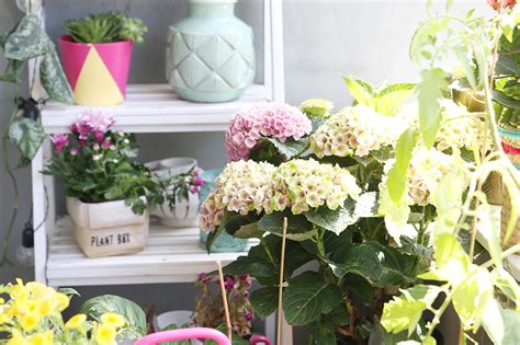 wann schneidet hortensien zurã ck hortensien zur 252 ckschneiden hortensien zur ckschneiden