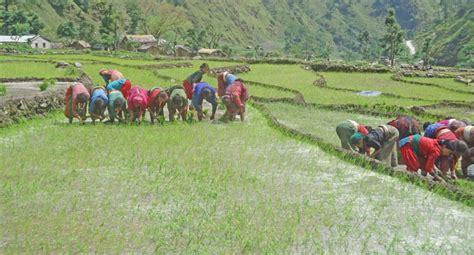 Kathmandu To Bajura locals begin agro farming in remote chhepi direction kathmandu