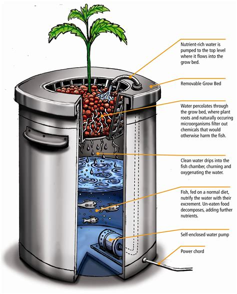 diy nutrients for hydroponics diy aquaponics hydroponics a sprig of