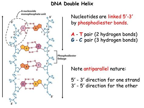 relationship dna six skills to strengthen relationship bonds books relationship between genotype and phenotype ppt