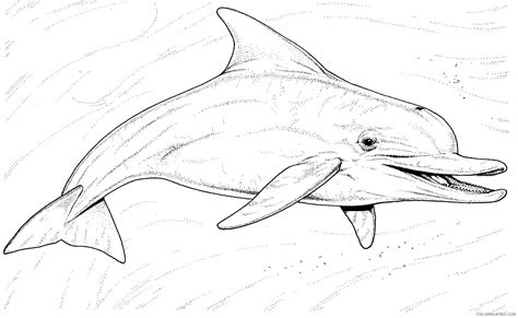 realistic underwater coloring pages realistic dolphin coloring pages underwater coloring4free