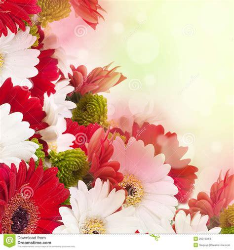 imagenes de flores rojas y blancas flores blancas y rojas fondo imagenes de archivo imagen
