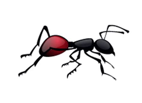 acabar con hormigas en casa c 243 mo acabar con las hormigas en casa vinfer mat 243 n