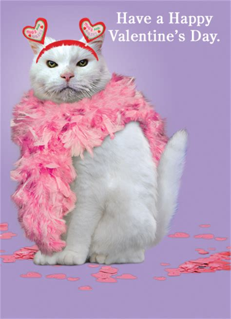 happy valentines day cat s day ecard quot cat quot from