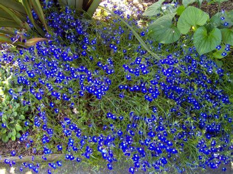 Blue Flowers For Garden Blue Flowers By Garden Gnome On Blue Flowers For Garden