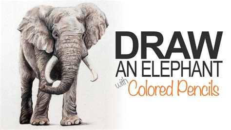 how to draw with colored pencils draw an elephant with colored pencils