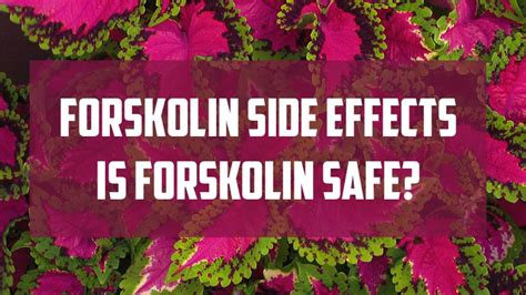 Forskolin Side Effects: Just How Safe Is Forskolin for Weight Loss?