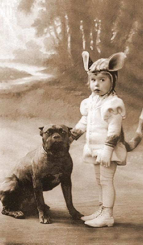 Old Photos Of The Nanny Dog Staffordshire Bull Terrier Pit Gallery