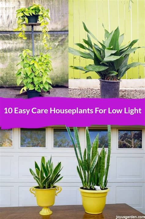 the 7 best houseplants for low light conditions plant best 25 lower lights ideas on pinterest outside lights