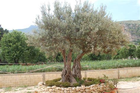 Delicious Piante Verdi Da Giardino #1: arbusti-sempreverdi_NG1.jpg