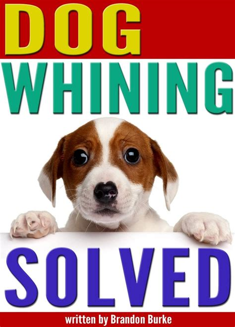 stop puppy whining whining solved 9 reasons why dogs whine and how to get your to stop whining