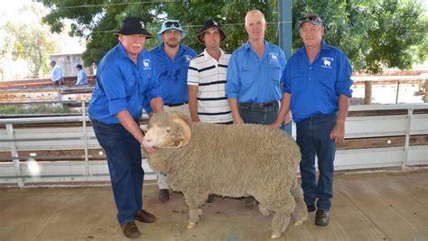 awn wool kurrajong park merinos hit 2500 the land