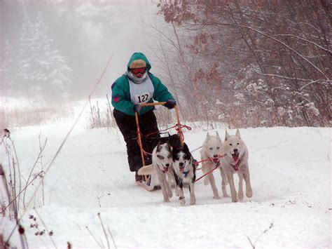 sled dogs place glog by yazsevilgen publish with glogster