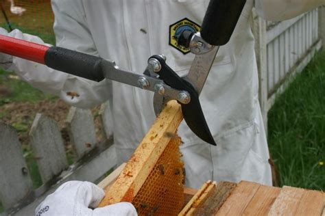 top bar hive with langstroth frames shifting my beehive from langstroth frames to top bar hive the cultured home