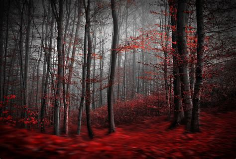 rote tapeten wandgestaltung carpet forest wall mural carpet forest wallpaper