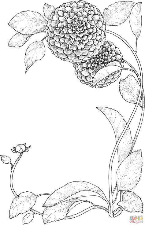 coloring pages zinnia 17 best images about coloring pages on pinterest