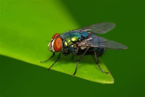 Toxilat Racun Lalat 3 In One a lalat photo photomalaysia community
