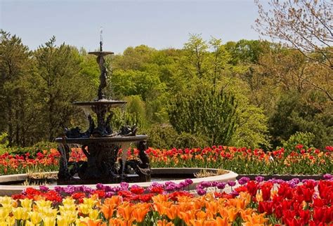 mn landscape arboretum mnla tulips mn landscape arboretum