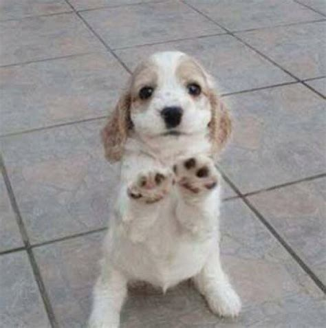 puppy high five emergency on quot puppy says high five http t co miah2lmpxq quot