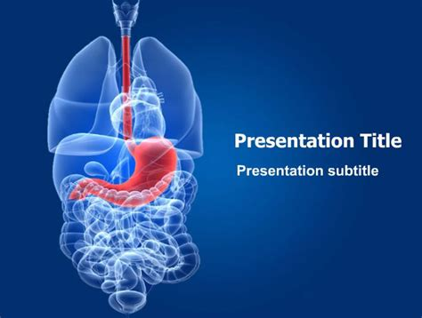 powerpoint templates free download liver human stomach powerpoint template this stunning