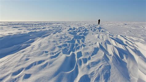 churchill polar bear holidays steppes travel