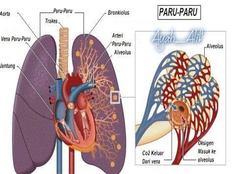 Obat Kanker Paru Paru Tbc Cairan Paru Paru Flek Paru Paru Sarang Semut tanda tanda orang derita penyakit paru paru bocor