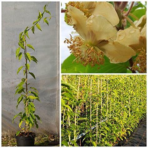 garten shop garten garten balkonpflanzen produkte gr 252 ner