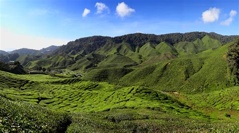 Landscape Tourism Definition File Cameron Highlands Tea Plantation 2012 Jpg Wikimedia
