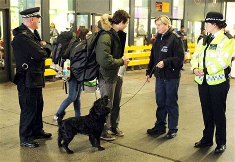 how sniffer dogs are trained sniffer dogs offend muslims