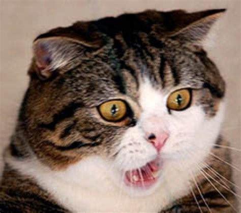Surprised Cat Meme - surprised cat meme original image memes at relatably com