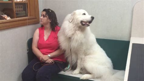 big fluffy fluffy dogs www pixshark images galleries with a bite