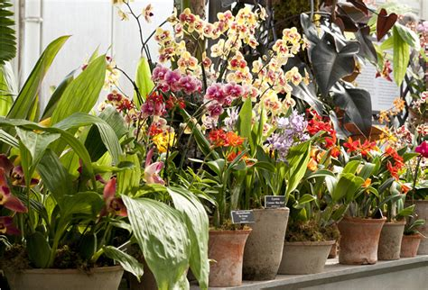 new york orchid show new york botanical garden the orchid show thailand