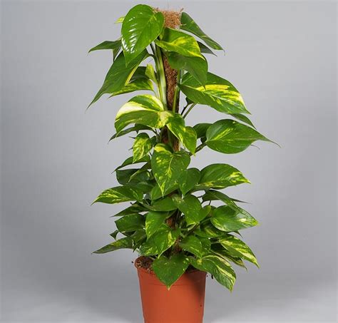 large low light indoor plants 20 easiest houseplants you can grow quiet corner